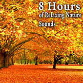 Play & Download 8 Hours of Relaxing Nature Sounds by Nature Soundscape | Napster