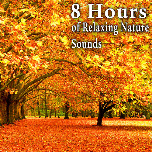 8 Hours of Relaxing Nature Sounds by Nature Soundscape