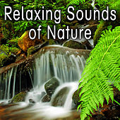 Relaxing Sounds of Nature by Nature Soundscape