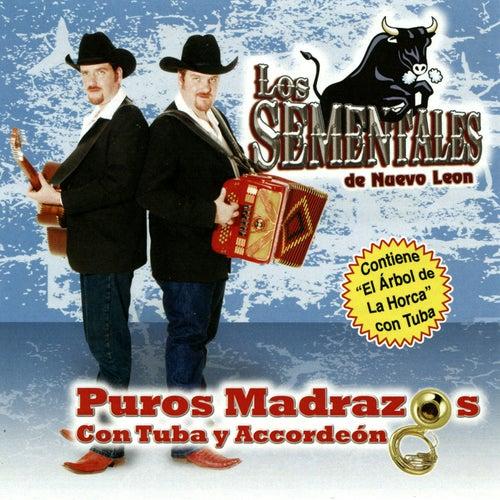 Play & Download Puros Madrazos Con Tuba y Accordeon by Los Sementales De Nuevo Leon | Napster