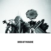 Play & Download Love Is Confusion by The Birds Of Paradise | Napster