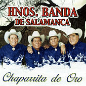 Play & Download Chaparrita de Oro by Hnos. Banda de Salamanca | Napster