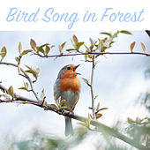 Bird Song in Forest - Relaxing Nature Sounds by Bird and Nature Sounds