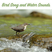 Bird Song and Water Sounds by Bird and Nature Sounds