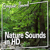 Nature Sounds in Hd by Organic Sound