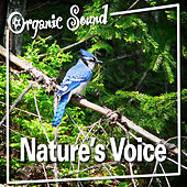 Play & Download Nature's Voice by Organic Sound | Napster