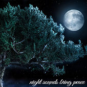 Play & Download Night Sounds Brings Peace by Various Artists | Napster