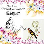 Play & Download Chardonneret Carduelis carduelis by Goldfinch | Napster