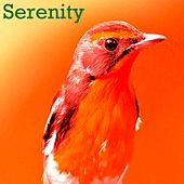 Play & Download Serenity by Nightingale | Napster