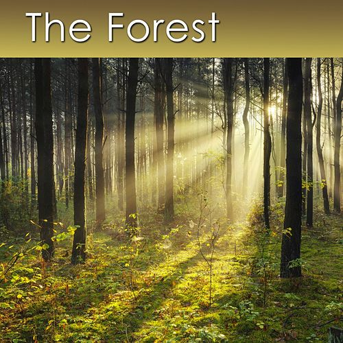 Play & Download The Forest (Relaxing Music with Healing Sounds of the Forest) by Dr. Harry Henshaw | Napster