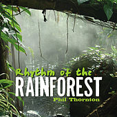 Play & Download Rhythm of the Rainforest by Phil Thornton | Napster