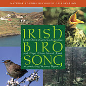 Play & Download Irish Birdsong by Natural Sounds | Napster