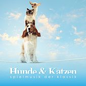 Play & Download Hunde & Katzen Spielmusik der Klassik by Various Artists | Napster