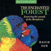 Play & Download The Enchanted Forest by David Sun | Napster