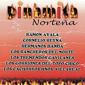 Play & Download Dinamita Norteña by Various Artists | Napster