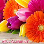 Play & Download Spa Ambient - Relaxing Zen Spa Music & Background Instrumental Music for Spa Resorts, Spa Massage and Relaxation by Serenity Spa: Music Relaxation | Napster