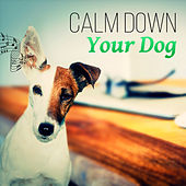 Calm Down Your Dog – Music Therapy for Dogs, Relaxation and Serenity, Destress, Wellness, Peace, Deep Sleep by Pet Music Academy
