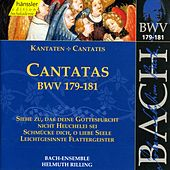 Play & Download J.S. Bach - Cantatas BWV 179-181 by Bach-Collegium Stuttgart | Napster