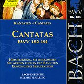 Play & Download J.S. Bach - Cantatas BWV 182-184 by Bach-Collegium Stuttgart | Napster
