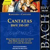 Play & Download J.S. Bach - Cantatas BWV 195-197 by Bach-Collegium Stuttgart | Napster