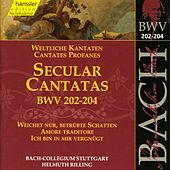 Play & Download J.S. Bach - Secular Cantatas BWV 202-204 by Bach-Collegium Stuttgart | Napster