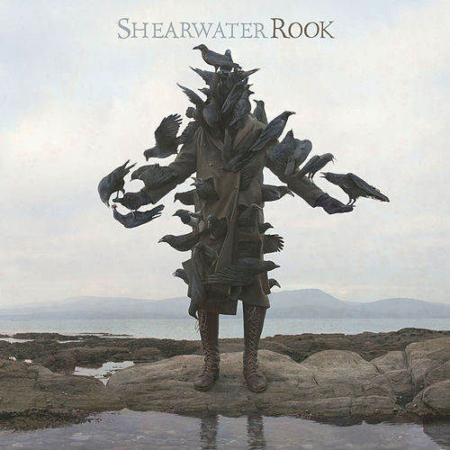 Play & Download Rook by Shearwater | Napster