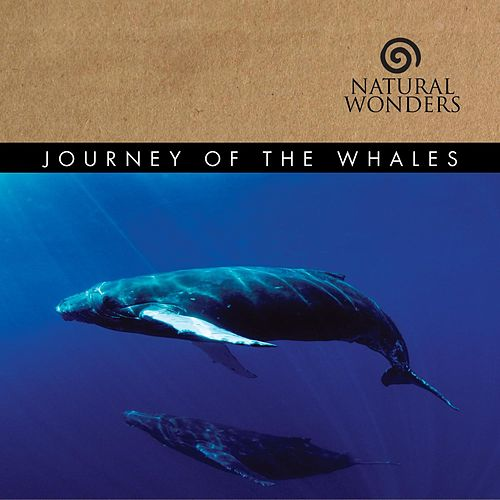 Play & Download Journey Of The Whales by David Arkenstone | Napster