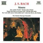 Play & Download Motets by Johann Sebastian Bach | Napster