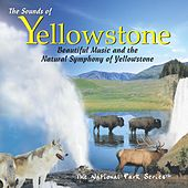 The Sounds of Yellowstone: Beautiful Music & the Natural Symphony of Yellowstone by Various Artists