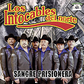 Play & Download Sangre Prisionera by Los Intocables Del Norte | Napster