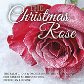 Play & Download The Christmas Rose by The Bach Choir | Napster