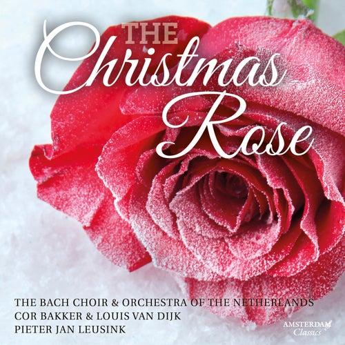 The Christmas Rose by The Bach Choir