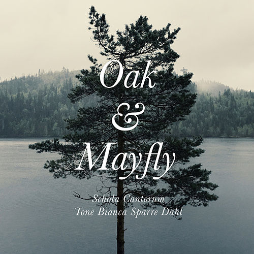Bjørn Morten Christophersen: Oak & Mayfly by Schola Cantorum