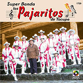Play & Download Super Banda Los Pajaritos De Tacupa by Los Pajaritos De Tacupa | Napster