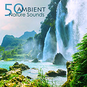 50 Ambient Nature Sounds - Relaxing Natural Music with Sounds of Nature of Mother Earth for Complete Ease, Sleep and Relax by Nature Ambience