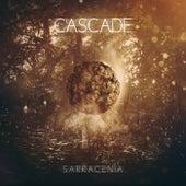 Sarracenia by Cascade