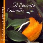 Play & Download A L'écoute Des Oiseaux by Quiétude: Musique | Napster