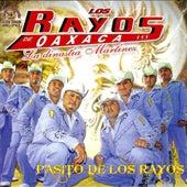 Play & Download Pasito De Los Rayos by Los Rayos De Oaxaca | Napster