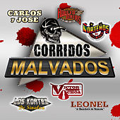 Play & Download Corridos Malvados by Various Artists | Napster