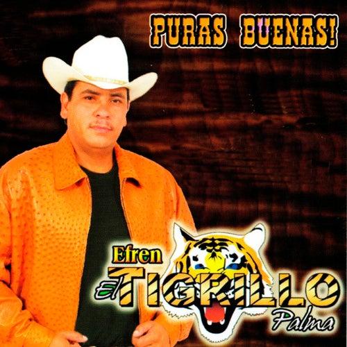 Play & Download Puras Buenas by El Tigrillo Palma | Napster