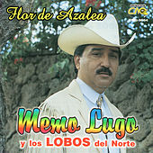 Flor de Azalea by Memo Lugo