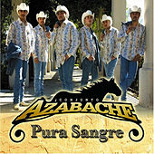 Play & Download Pura Sangre by Conjunto Azabache | Napster