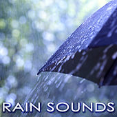 Play & Download Rain Sounds - White Noise Nature Sounds & Soft Instrumental Music by Rainforest Music Lullabies Ensemble | Napster