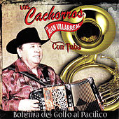 Play & Download Bohemia del Golfo al Pacifico by Los Cachorros de Juan Villarreal | Napster