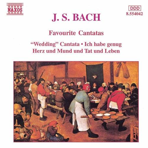 Play & Download Favourite Cantatas by Johann Sebastian Bach | Napster