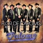 Play & Download Flor De Capomo by Palomo | Napster