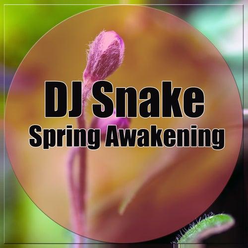Play & Download Spring Awakening by DJ Snake | Napster