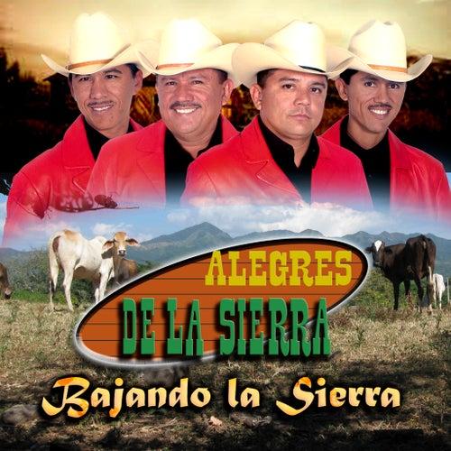 Play & Download Bajando La Sierra by Los Alegres De La Sierra | Napster