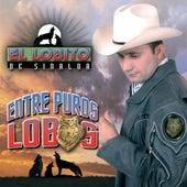 Play & Download Entre Puros Lobos by El Lobito De Sinaloa | Napster