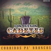 Play & Download Corridos Pa' Broncos by Los Nuevos Cadetes | Napster